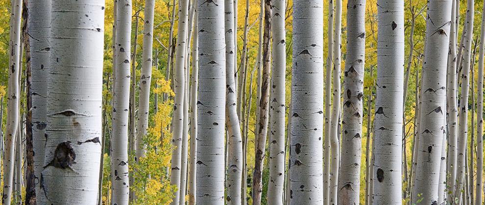 brezov-gozd
